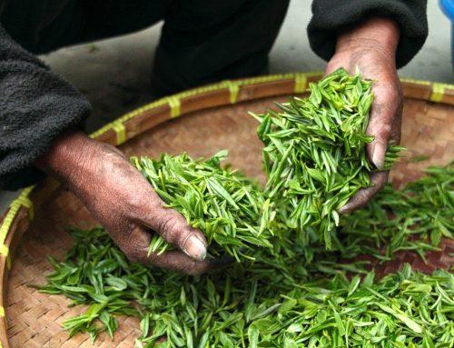 Groene thee tegen acné